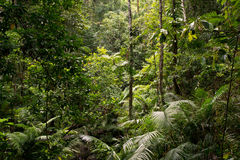 Daintree Stock Photography