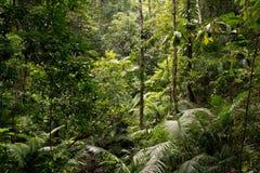 Daintree. National Park, rainforest scenery in Queensland, Australia Stock Photography