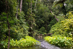 Daintree Stock Photo