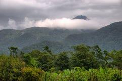 daintree park narodowy podróżowanie obraz stock