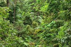 daintree park narodowy podróżowanie Zdjęcia Royalty Free