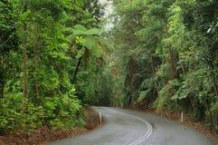 daintree park narodowy podróżowanie Zdjęcia Stock