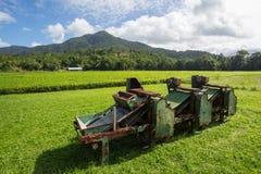 Daintree Tea Plantation. Fields of tea leaves in the Daintree region of Queensland, Australia Stock Images
