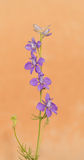 Dainty purple Larkspur Stock Photography
