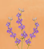 Dainty purple Larkspurs Royalty Free Stock Images