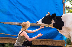 Dairy black and white spotted cow in the village. Young woman caressing cow jowl stock photo
