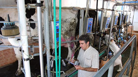 Dairy Business Management. Manager and farm worker at the dairy farm Royalty Free Stock Images