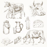 Dairy cattle farm. Sketch set. Cow eating grass, cute calf drinks milk, cow's head, milk products. Milk cans, bottle, cheese, butter.  vector illustration Stock Images