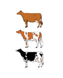 Dairy cattle illustration. Vector chart of hand drawn dairy cattle breeds. Beautiful ink drawing of dairy cows Royalty Free Stock Photo