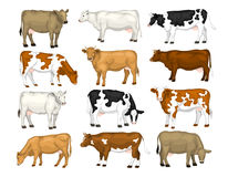 Dairy cattle set Stock Photo