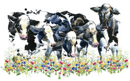 Dairy cow on the field. Watercolor illustration stock illustration