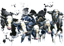 Dairy cow on the field watercolor illustration. Isolate on white background Royalty Free Stock Photography