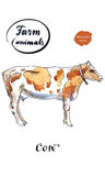 Dairy cow. Hand drawn - watercolor vector Illustration Stock Photography