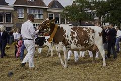 Dairy cow show contest winner Stock Photos