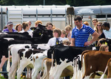 Dairy cows at Cartmel show 2011 Stock Photography
