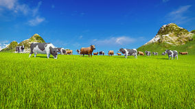 Dairy cows graze on alpine meadow. Herd of dairy cows graze on a green alpine meadow with mountain peaks on the background. Low angle view. Realistic 3D royalty free illustration