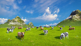Dairy cows graze on alpine pasture. Farm landscape with a herd of mottled dairy cows grazing on a verdant alpine pasture at sunny day. High angle view. Realistic stock illustration