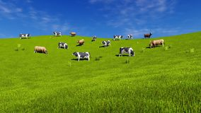 Dairy cows graze on open green meadow. Herd of mottled dairy cows graze on the open meadow covered with fresh green grass at sunny spring day. Countryside stock illustration