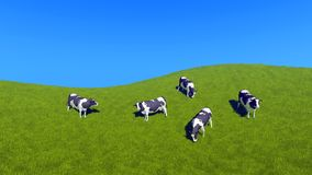Dairy cows grazing on green pasture top view. Countryside scenery with dairy cows grazing on green pasture against clear blue sky background with copy space Stock Images