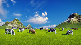 Dairy cows on green alpine pasture Royalty Free Stock Photos