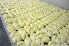 Dairy factory. Braid shaped cheese making in a dairy factory Stock Photos