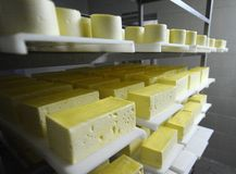 Dairy factory. Cheese making in a dairy factory Stock Photos