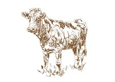 Dairy farm. Farm animal. Cow graze in the meadow. Village vintage sketch stock illustration