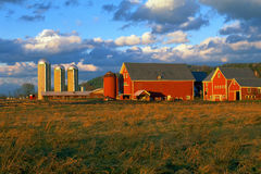 Red Dairy Farm Barns and Silos Royalty Free Stock Photo