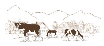 Dairy farm. Cows graze in the meadow. Rural landscape, village vintage sketch. Dairy farm. Cows graze in the meadow. Rural landscape, village vintage sketch vector illustration