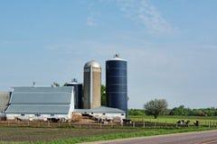 Dairy Farm 2. A dairy farm and farmyard animals Stock Images