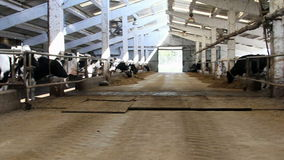 Dairy farm stock video