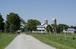 Dairy farm in Indiana Royalty Free Stock Image