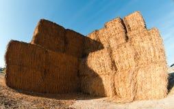 Warehouse hay on a farm. Dairy farm in Kibbutz Revivim. Israel Stock Photo
