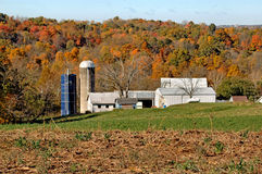 Dairy Farm in Southern Ohio. Image of a dairy farm in Southern Ohio royalty free stock image