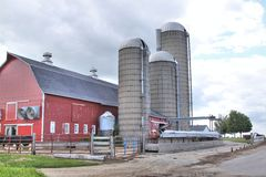 Dairy farm with three silos. A dairy barn showing one cow and three silos Royalty Free Stock Photography