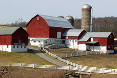Dairy farm Stock Photography