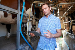 Dairy Farmer Using Digital Tablet In Milking Shed Stock Photo