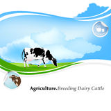 Dairy Farming Royalty Free Stock Image