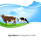 Dairy Farming Stock Photo