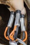 Dairy farming Stock Photo
