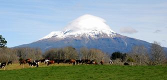 Dairy Farming near Mount Taranaki Royalty Free Stock Photos