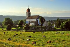 Dairy herd, Monnet la ville, Jura, France. A late evening view of a grazing dairy herd, under the hill, of the church of St Maurice, just outside Monnet la ville stock image