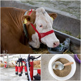 Dairy industry collage Royalty Free Stock Photos