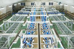 Dairy milking system farm Stock Image