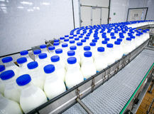 Dairy plant, conveyor with milk  bottles Royalty Free Stock Photos