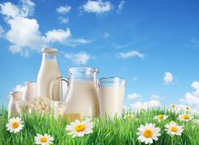 Dairy products on the grass. Royalty Free Stock Photography
