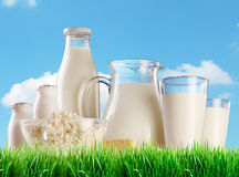 Dairy products on the grass. Stock Photography
