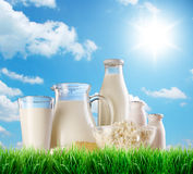 Dairy products on the grass. Stock Photo