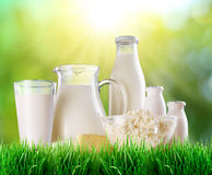 Dairy products on the grass. Royalty Free Stock Images