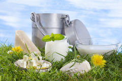Dairy products on the grass with flowers Stock Images
